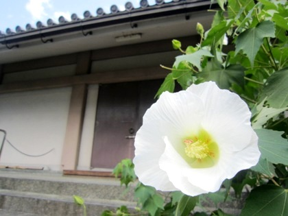 芙蓉 聖倉殿
