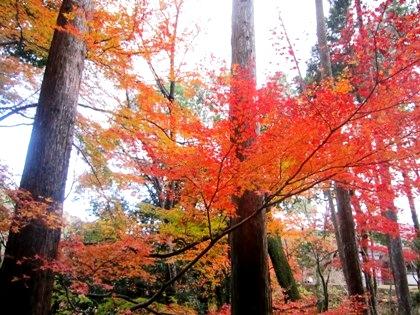 長谷寺奥の院の紅葉