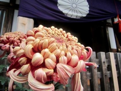 大神神社の菊 十六菊花紋