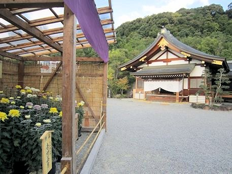 大神神社儀式殿と奉納菊花
