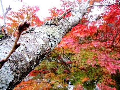 談山神社駐車場の紅葉