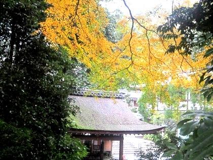手水舎 大神神社の紅葉