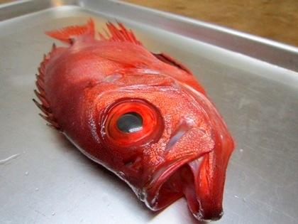 キントキ鯛