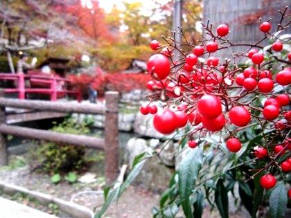南天 談山神社