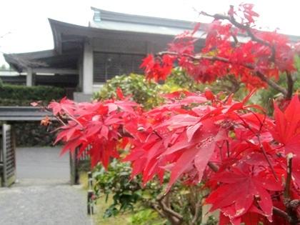 大神神社の紅葉 大礼記念館