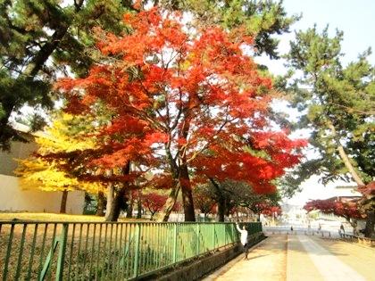 興福寺の紅葉 登大路