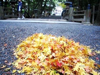 大神神社参道の落葉