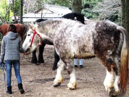 春日若宮おん祭お渡り式の馬