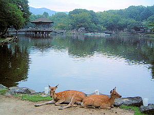奈良公園の鹿 鷺池