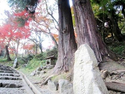 二もとの杉 長谷寺の紅葉