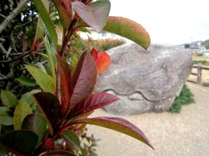 飛鳥の亀石