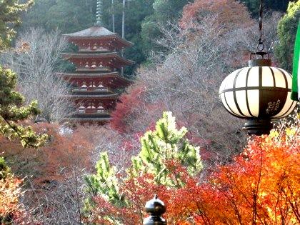 長谷寺の紅葉 国宝本堂 五重塔