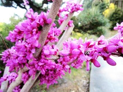 飛鳥川の畔に咲く花