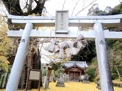 素盞雄神社の大銀杏 イチョウの巨樹 いちょうの木