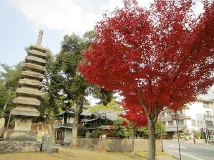 猿沢池の紅葉 九重塔