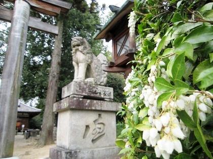 若宮社の馬酔木の花