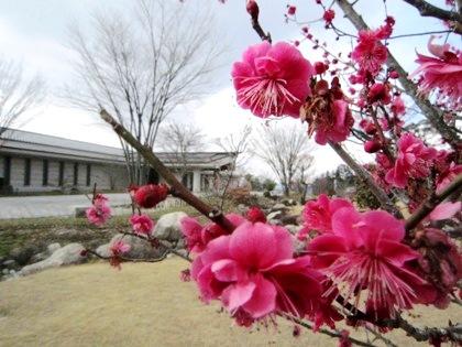 奈良県立万葉文化館の梅