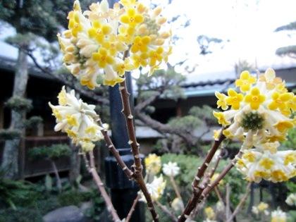 三叉の花 中庭