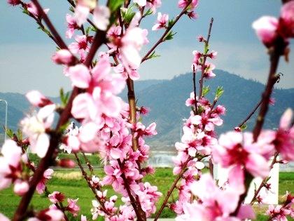 三輪山の風景