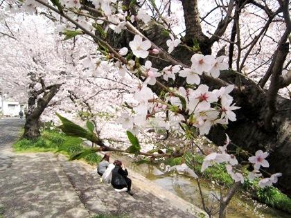 粟原川の花見見物