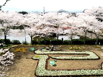 ジャンボ花絵と桜の風景