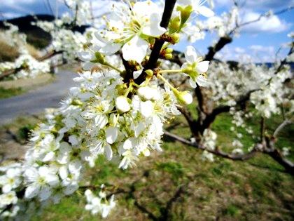 春の山の辺の道