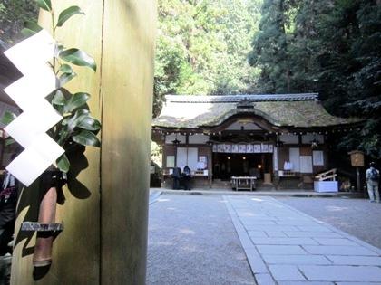 狭井神社の榊