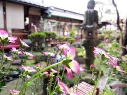 4月初旬の中庭風景