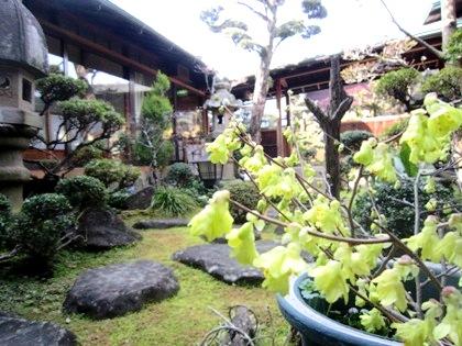 4月初旬の中庭風景 奈良の旅館大正楼
