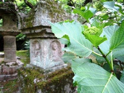 長岳寺の紫陽花