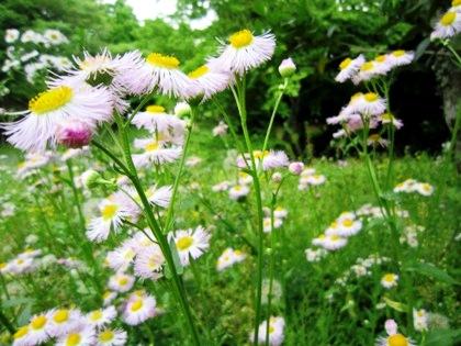 甘樫丘に咲く花