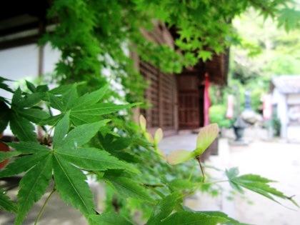 楓の種と長岳寺拝堂