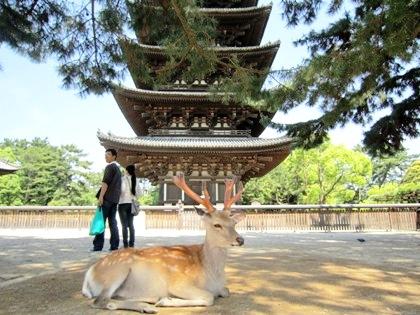 興福寺五重塔 奈良公園の鹿