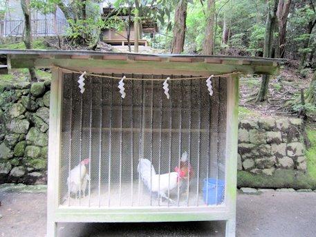 石上神宮の鶏小屋