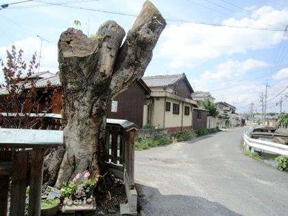 ヨノミの木