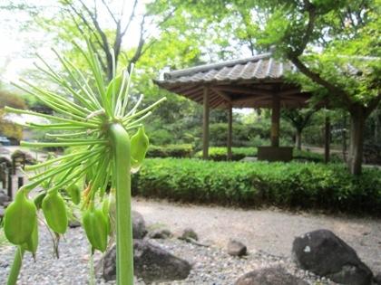 吉城園の茶花の庭