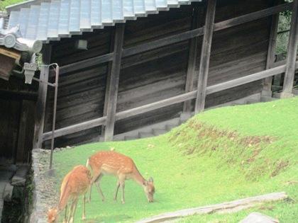 東大寺二月堂の鹿