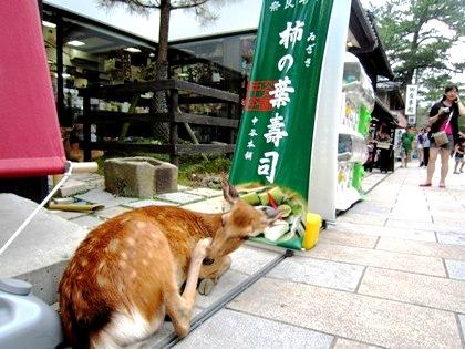 東大寺門前の鹿