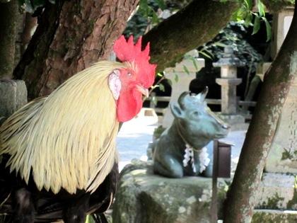 石上神宮の鶏と牛