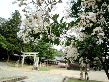 東大寺三月堂前のさるすべり