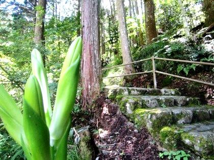蜻蛉の滝 石段
