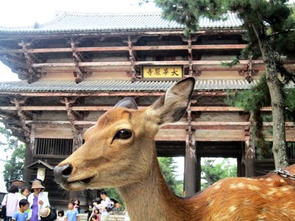 東大寺南大門 奈良公園の鹿