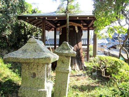 おだまき杉と石灯籠