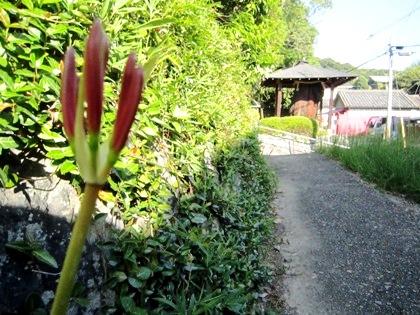 若宮神社脇のヒガンバナ
