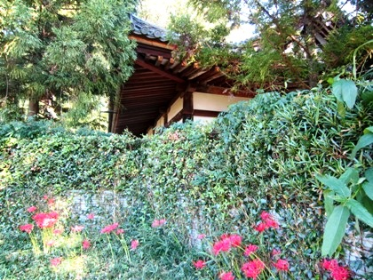 若宮神社境内脇のヒガンバナ
