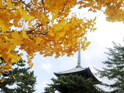 興福寺五重塔と黄葉