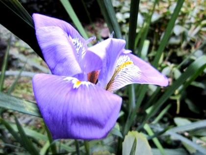 大正楼中庭に開花する花