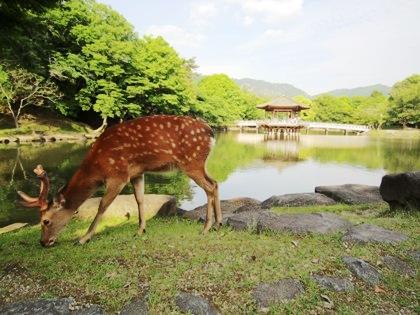 奈良公園の鹿と浮見堂