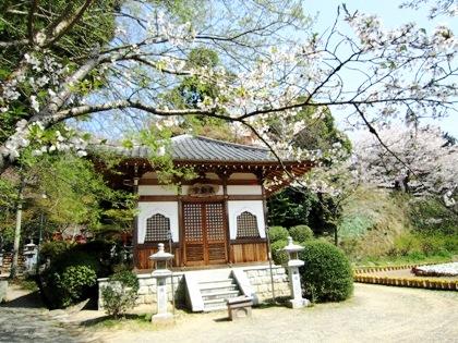 不動堂と桜