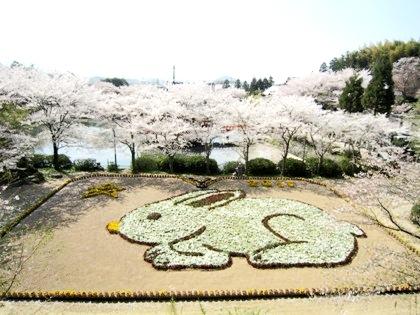 安倍文殊院のジャンボ花絵 桜の花